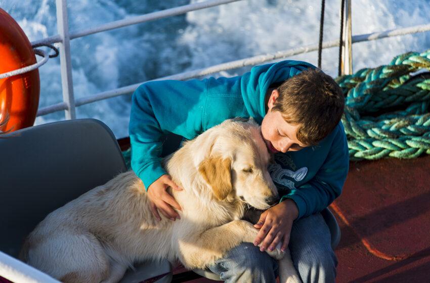 """""""Pet therapy"""": molto di più di un animale domestico"""