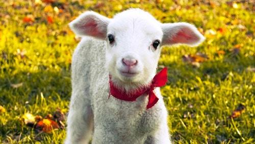 Pasqua col Covid – Volume 2: tra delivery e agnelli