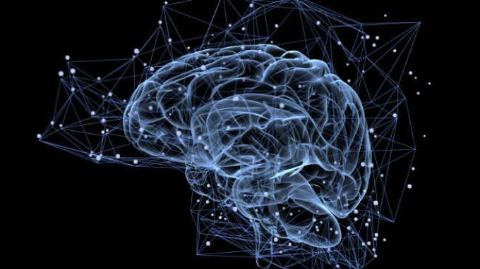Organoidi cerebrali realizzati per la prima volta in laboratorio