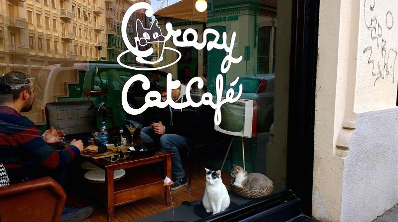 Il Crazy Cat Cafè in difficoltà a causa di una live IRL