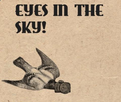 """""""I piccioni sono droni"""": il complotto sugli uccelli"""