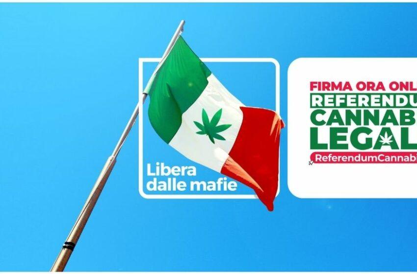 """Cannabis legale in Italia: un """"sogno"""" che va inseguito?"""